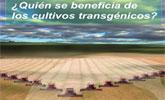 �Qui�n se beneficia de los cultivos transg�nicos?