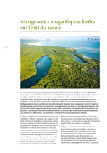 Mangroves - magnifiques forêts sur le fil du rasoir