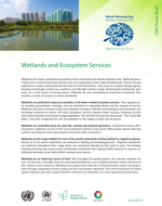 Wetlands and Ecosystem Services