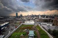 Huertos en las azoteas: oportunidad de negocio para una ciudad más sostenible